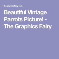 Beautiful Vintage Parrots Picture! - The Graphics Fairy