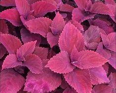 Daftar Tanaman Obat Lengkap Beserta Gambar dan Khasiatnya - BibitBunga.com Herbal Leaves, Medicinal Plants, Health Education, Herbalism, Diy And Crafts, Plant Leaves, Remedies, Health Fitness, Backyard