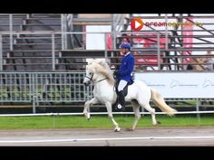 Guòmundur Friòrik Björgvinsson - Hrímnir frá Ósi - Wereldkampioen 2015. Oprichting, kracht van het paard, combinatie ruiter en paard. Heel mooi!