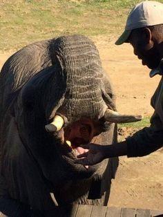 Elephant experience, Garden Route - Botlierskop Game Reserve