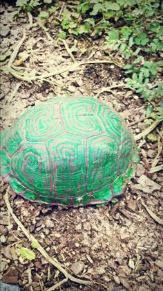 When you find an empty turtle shell just paint it and use to decorate your garden:)