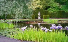 This photo shows a tranquil ornamental pond with water liliies and irises in the… Natural Pond, Be Natural, Landscaping With Rocks, Garden Landscaping, Garden Ponds, English Landscape Garden, Building A Pond, Small Fountains, Backyard Water Feature