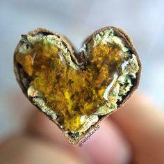RT @lamotagrow: #Marijuana... Always in our heart!