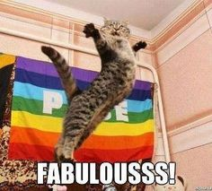 fabulouss bitch
