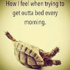 Yes! It's a struggle to get my pregnant butt out of bed these days.