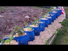 ▶ The Underground Hybrid Self Watering Rain Gutter Style Grow System.