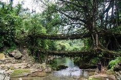 Los puentes de raíces vivas, Cherrapunji, Meghalaya, India | 33 puentes impresionantes que tienes que cruzar en tu vida