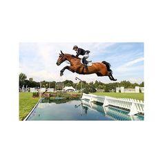 Elegant And Graceful Sports Memorabilia London 2012 Carl Hester Hand Signed 12x8 Photo Team Gb Olympics