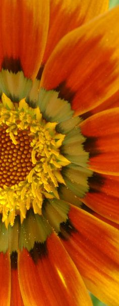 sunflowerFosterginger.Pinterest.ComMore Pins Like This One At FOSTERGINGER @ PINTEREST No Pin Limitsでこのようなピンがいっぱいになるピンの限界
