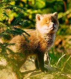 Red Fox Cub | l-i-s-i-zz-a.livejournal.com