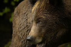 Canadian Geographic Photographer-in-Residence Michelle Valberg shares photos from her most recent trip to the Khutzeymateen Grizzly Bear Sanctuary in British Columbia.