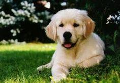 「dog」の画像検索結果