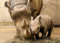 neushoorn en baby