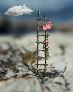 Up the ladders to heavenly flowers Beautiful Nature Wallpaper, Love Wallpaper, Beautiful Images, Wallpaper Backgrounds, Beautiful Flowers, Iphone Wallpaper, Miniature Photography, Cute Photography, Creative Photography
