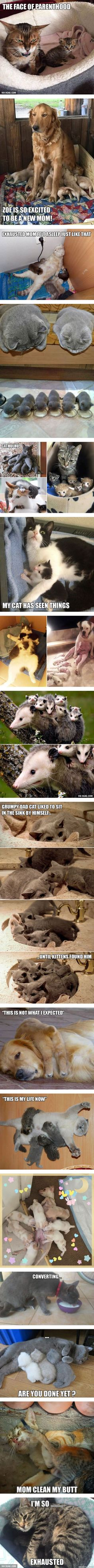 Animal Expressions That Perfectly Sum Up What It's Like To Be A Parent