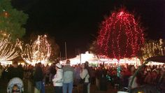 Light Up Mount Dora kicks off the season. The lights are on until the Art Festival at the first weekend in February. Christmas Lights, Christmas Tree, Art Festival, Light Up, Seasons, Holiday Decor, February, Kicks, Florida