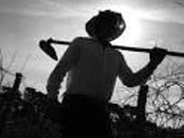 Blog do Dr. Iannini.: Concessão de aposentadoria rural por idade exige c...