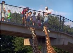 Abilene Zoo, Abilene Texas - love feeding the giraffes and seeing them face to face!  This was probably the best zoo ever just for this!  Those giraffes had green tongues; I still remember that!