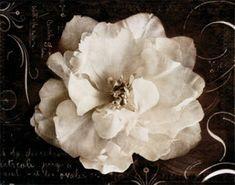 Imagens lindas de flores para artesanato