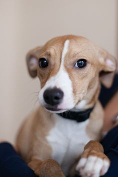 ADOPTED!!!! BOOGER...ALIQUIPPA, PA...If you would like more info on me please contact The Beaver County Humane Society at 724-775-5801