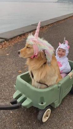 Baby Animals Super Cute, Cute Baby Dogs, Cute Funny Babies, Cute Little Animals, Cute Funny Animals, Cute Kids, Cute Puppies, Cute Funny Baby Videos, Funny Animal Videos