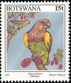 Meyer's Parrot stamps - mainly images - gallery format