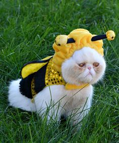 These little kitties are so mad that their parents dressed them up. Why is mommy dressing us up in these silly get-ups? Bumblebee Halloween Costume, Cheap Halloween Costumes, Pet Costumes, Dog Halloween, Kitten Costumes, I Love Cats, Cool Cats, Crazy Cats, Cat Comics