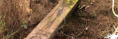 Council bans snares to protect British wildlife