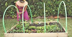 This is a genius idea to make your own greenhouse with 4 upcycled hula-hoops, so if you have old hula-hoops taking the dust, reuse them for your greenhouse :)