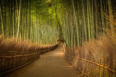 Bamboo Forest in Kyoto   Today I have a new video tutorial for you (scroll down to watch it).  It will show you how I edited one of my recent photos taken in the bamboo forest in Kyoto, Japan