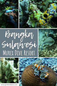 Murex Dive Resort Bangka - Tauchresort im Norden von Sulawesi Jimbaran Bali, Bangka Island, Dive Resort, Florida Keys, Snorkeling, Southeast Asia, Places To See, Diving, Travel Companies