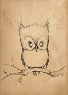 owl drawing... this is TOO cute!