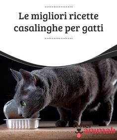 The best homemade recipes for cats- Le migliori ricette casalinghe per gatti The best homemade recipes for cats Practicality often leads pet owners to choose canned food. Today we give you some alternatives: here are some homemade recipes for cats. Love Pet, I Love Cats, Pet Food Delivery, Pet Food Storage, Pets 3, Cute Stories, Grumpy Cat, Diy Stuffed Animals, Cat Food