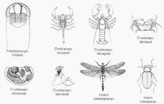 Here we have simply stated out Arthropods Facts and Facts About Insects for Kids, then the distinctive characteristics of insects and at last we have links to all the articles about each Arthropods and insects along with the picture.