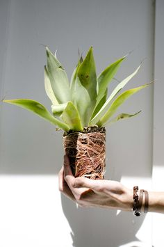 THE BEST PLANTS FOR