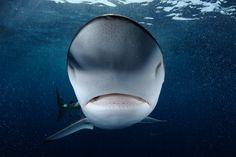 The Shark Trade of the Arabian Sea  http://lightbox.time.com/2012/11/29/the-shark-trade-of-the-arabian-sea/#1
