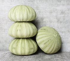 Green Sea Urchin 2  1 pc. by atlantisshellco on Etsy, $0.75