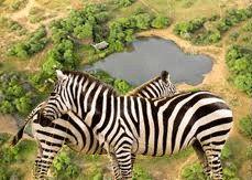 African Waterholes