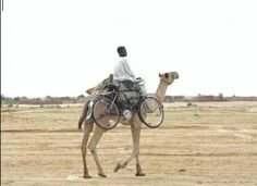 Intermodalitat bici+camell