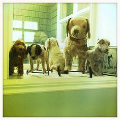 Puppy show.