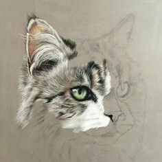 really mind blowing art of drawing (: Pastel Drawing, Pastel Art, Cat Drawing, Painting & Drawing, Watercolor Paintings, Animal Paintings, Animal Drawings, Pencil Drawings, Scratchboard Art