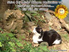 Shiva, Meditation, Cats, Animals, Animales, Pictures, Gatos, Animaux, Animal