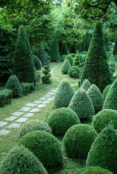 Green landscape design with boxwood and cypress