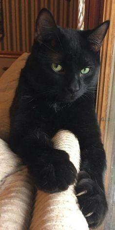 Ebony tube kitty