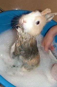 Bañemos al conejo :P