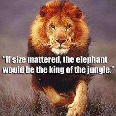 LIon never loses sleep over the opinion of sheep - Google Search