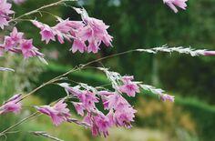 Fairies Fishing Wands Zulu Pink