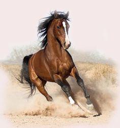 Quantos tipos de cavalos existem?!