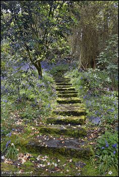 Steps in Waterford Gardens, Ireland, photo by Ernie Watchorn Beautiful Landscapes, Beautiful Gardens, Nature Aesthetic, The Secret Garden, Secret Gardens, Dream Garden, Aesthetic Pictures, Pathways, Garden Paths