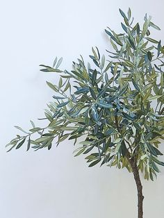 Buy a Large Olive Tree. We are so excited by these extra large olive trees, they are almost indistinguishable from their Mediterranean counterparts. Faux Plants, Indoor Plants, Faux Olive Tree, Mediterranean Garden, Olive Gardens, Cafe Design, Faux Flowers, Fairy Lights, Green And Grey